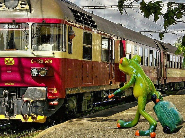 frog-1120431_640