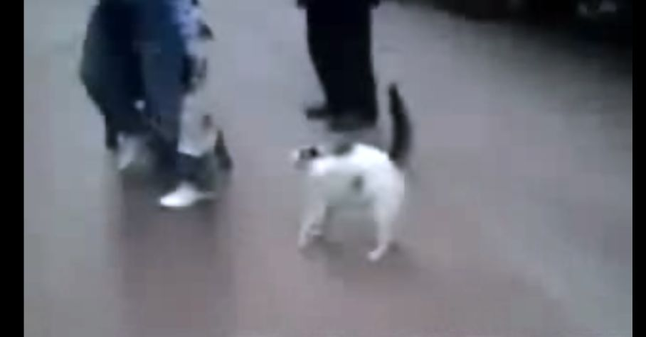 猫強っ!!ネコvsイヌの戦いの行方が気になる