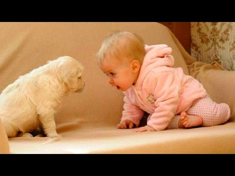 これは、ヤバイ!赤ちゃんとワンちゃんのツーショットを集めた動画に大爆笑