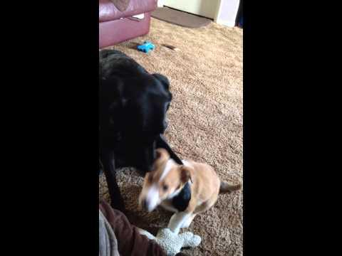 親友は誰?の問に、感動的な反応を見せた2匹の犬の友情泣ける