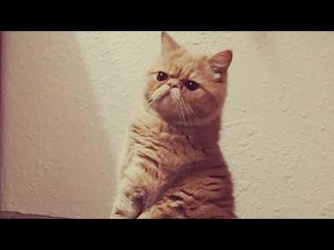 まるで人間?猫が立ってる映像が可愛くてヤバイ