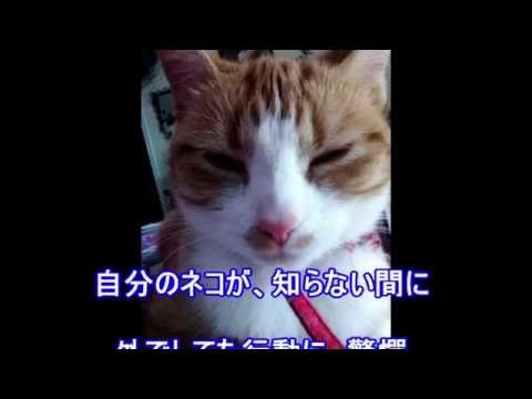 【驚愕!】手紙で真相を知った猫の行動に涙
