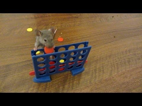 マウスのスゴ技連発!頭良い!!
