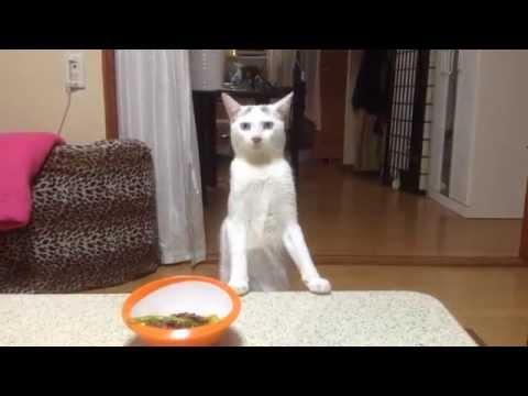 後ろ歩きするネコが可愛すぎ