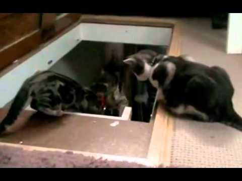 猫が、猫を後ろから落とす事件が発生!!
