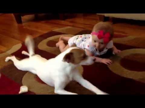 キュン死する!笑。赤ちゃんにハイハイを教える犬が可愛い