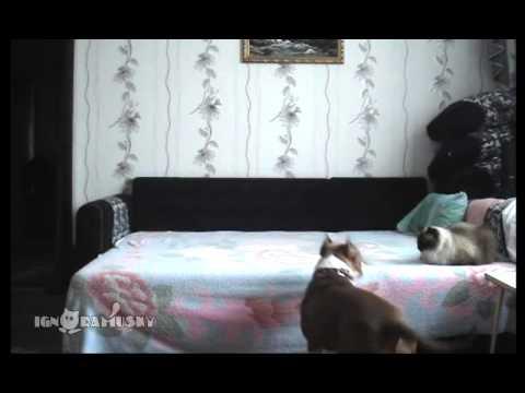 ベッドの上を禁止されてた犬が、飼い主が居なくなった途端・・・衝撃的な光景が!
