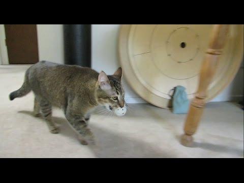 猫がエサをゲットするまでの道のり