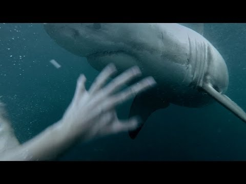 いやいや、これマジで?ヤバイっしょ!海にダイブしたら、待ってたのはサメ!
